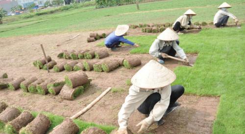 dịch vụ trồng cỏ chăm sóc cỏ