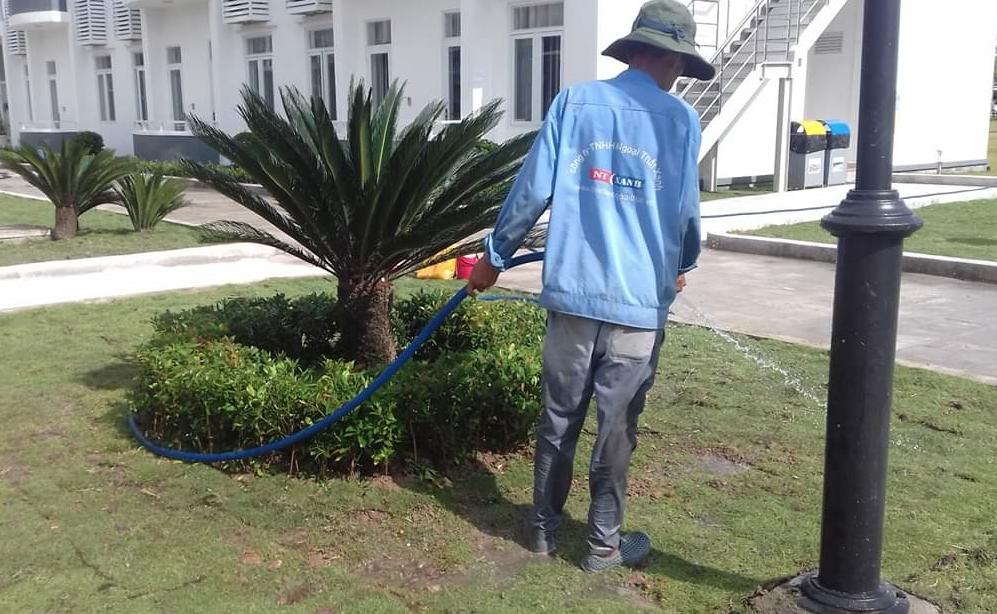 dịch vụ chăm sóc cây xanh tại bình dương chất lượng hàng đầu